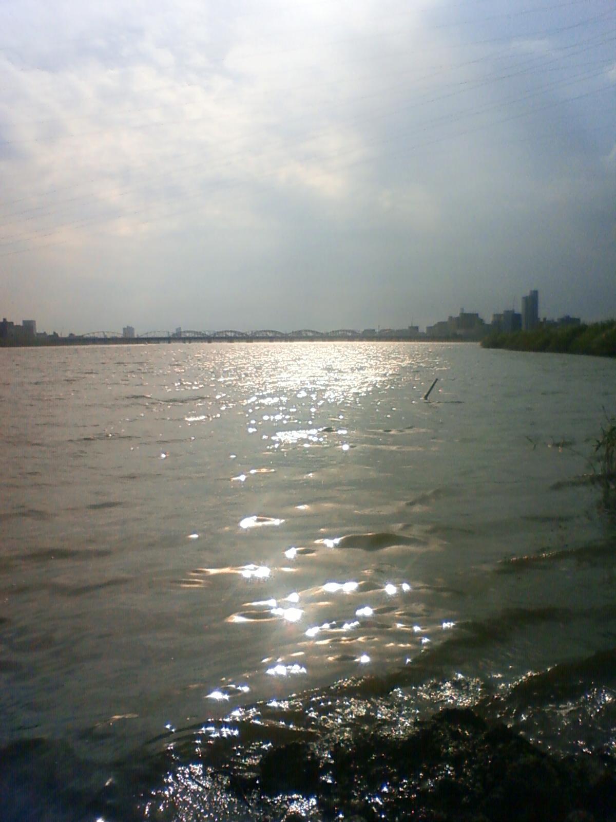 今日も淀川